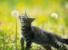 graypcat: (Одуванчик)