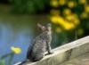 graypcat: (Нейтрал)