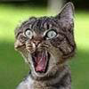graypcat: (В ахуе)