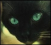 graypcat: (Черный)