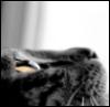 graypcat: (Вверх)