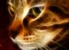 graypcat: (Фрактальный котэ)