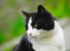 graypcat: (Ага.)