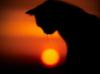 graypcat: (Не понял)
