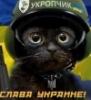 serp_ukrop: (кот)