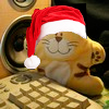hrenov_drummer: (новогодний кот)