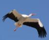 toshick: (stork)