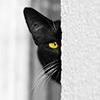 11110010: (котя)