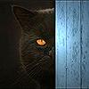 11110010: (котя.)