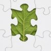 ssteplana: (leaf piece)