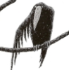 lactoriacornuta: Crow (Crow)
