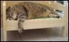 lactoriacornuta: Fat cat (Fat cat)