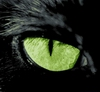 catbegemot: (catbegemot.net)