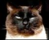 seasonic: (Cat)
