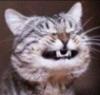 seasonic: (cat2)
