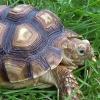 graganyaarou: (Turtle)