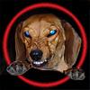 ab_dachshund: (moderatorial)