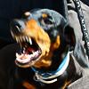 ab_dachshund: (Hellhound)