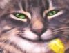 irater2: (cat)