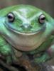 leon2016: (frog)