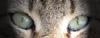 hannush: (Cat's eyes)