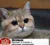 marxdemiurg: (Котенька)