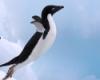letu4ij_pingvin: (pingoo)