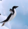 letu4ij_pingvin: (pingvin)