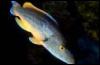 proton72: (рыбка)