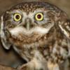 robofob: (owl)