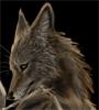 coyoteodin: (оттиэсенное by TS-cat (TieS Akintu))