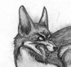 coyoteodin: (evil by Сущность)