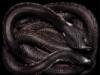 egogenous_zone: (serpent)
