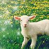 dragon_moon: (lamb)