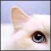 dragon_moon: (kitty_blue eyed)
