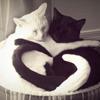 dissimilis_s: (noir et blanc)