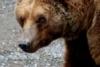 yorie: (bear)