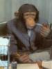 taganay: (chimp)