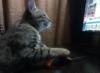 victor_12: (compcat)