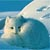 canyondrive: small white fox curled up in snow with tail over nose (self)