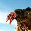 the_vulture: (tvhead)