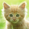 nlesnoj: (cat)