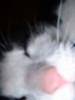 kiya: (nose, misc)