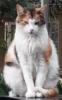 thetimesink: (catitude)