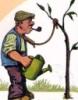 tolya99: (plant)