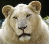 green_eegs: (she-lion)