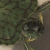 artan: (turtle!)