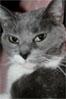 cosmicgarden: (mina kitty)