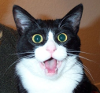 mithriltabby: Shocked cat (Shocked)