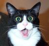 mithriltabby: Shocked cat (Shocked)